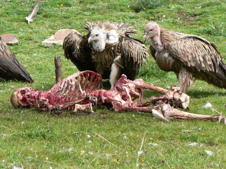 Skeletonskyburial